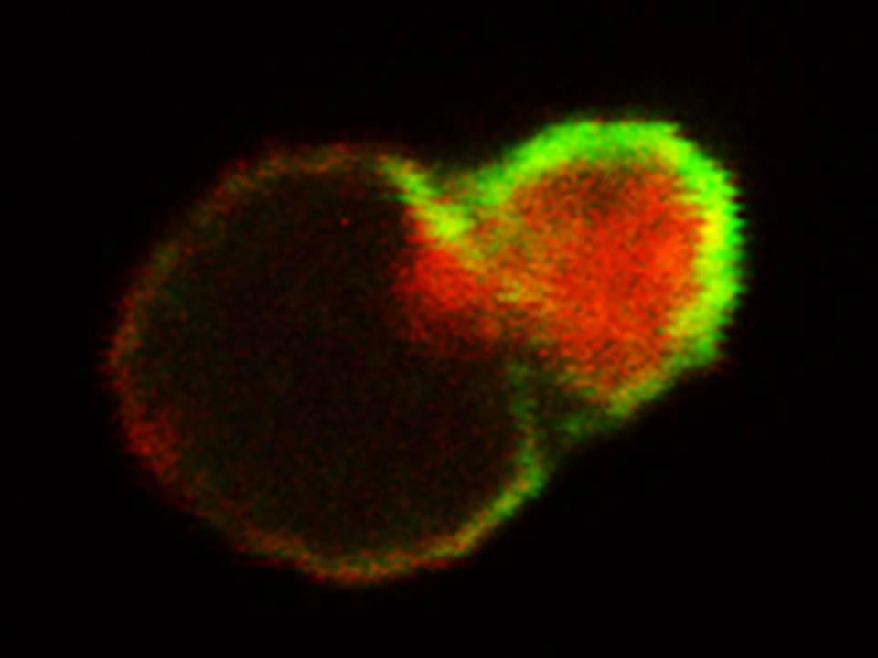Stem Cell Chromosomes | Biomarkers