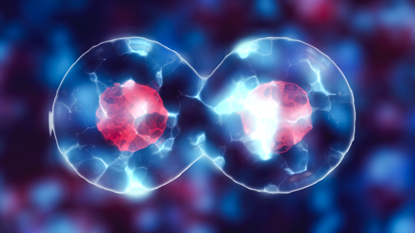 What Are Stem Cells? A Complete Guide