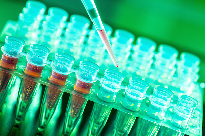Stem Cell Genetic Fidelity
